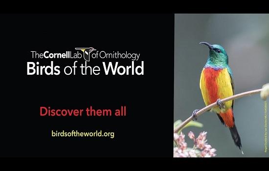 IMG Acceso en prueba a base de datos de ornitología hasta 30 de abril